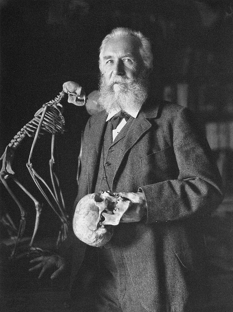 Ernst Haeckel (ויקיפדיה)